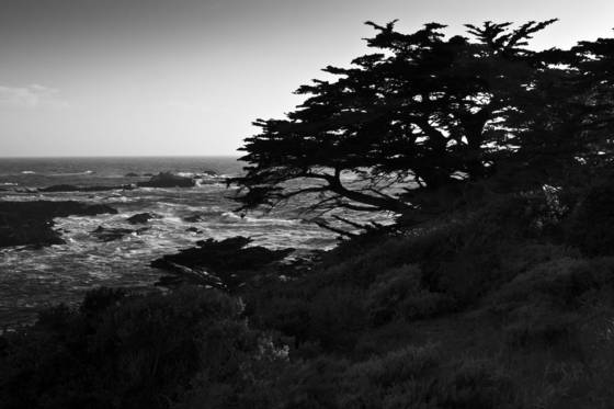 Cypress_at_sunset