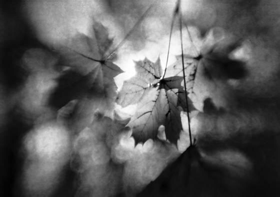 Autumn_nostalgia