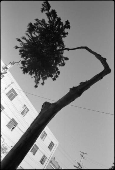 Elbow_tree