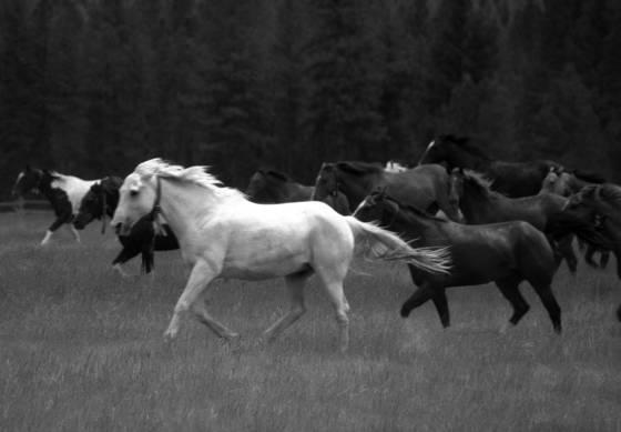 Montana_wrangle