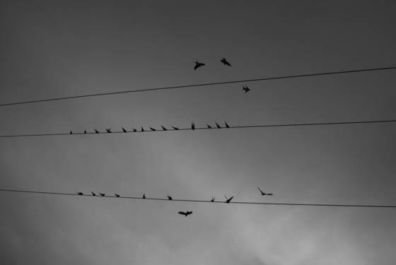 Birds_online