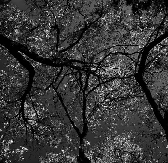 Tree_circle