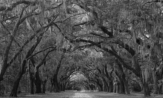 Plantation_road
