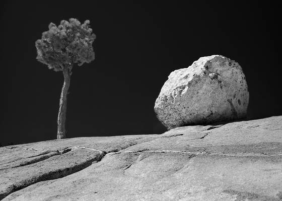 Tree_and_rock