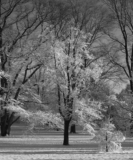 Winter_storm_sun_rise