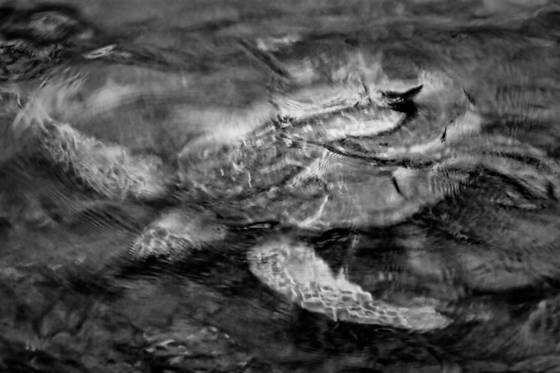 Submerged sea turtle