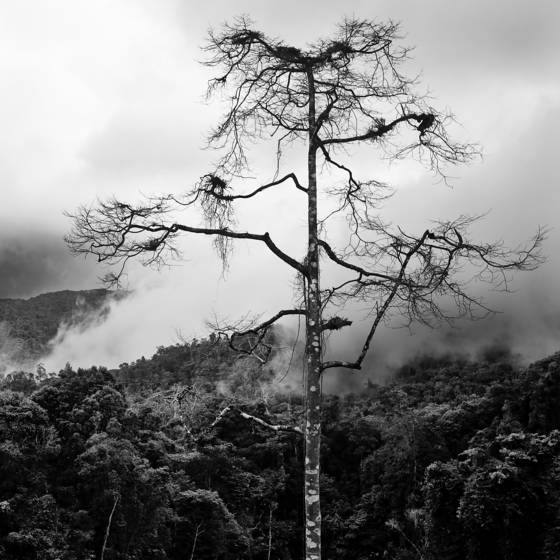 Solitary_tree