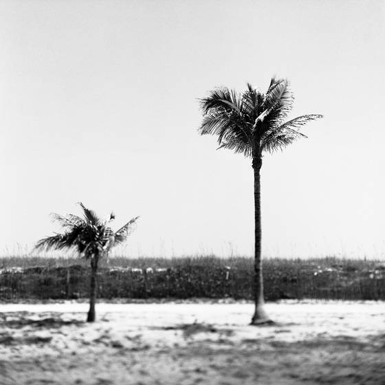 Two_palms_tif