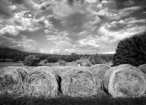 Round_hay_bales