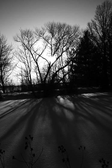 Shadows__2
