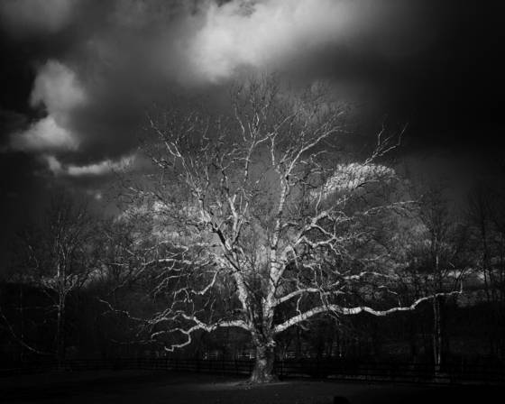 Winter_oak