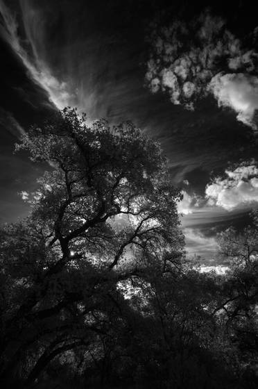 Tree_and_sky