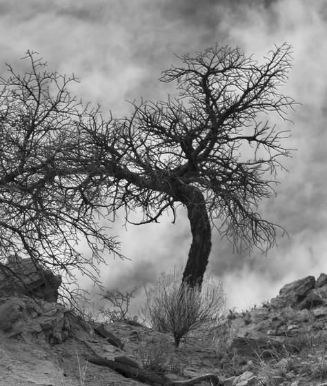 Bare_tree_in_jemez_mountains