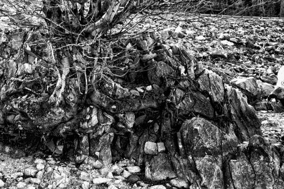 Rocks_and_tree