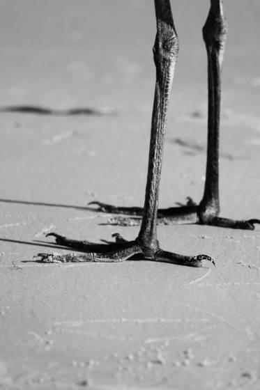 Just_legs