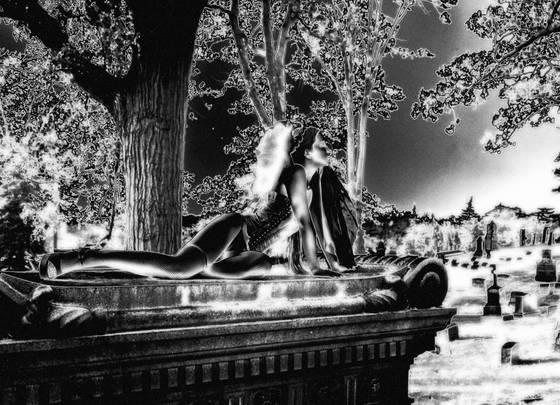 Bridal_wraith__aubrey_