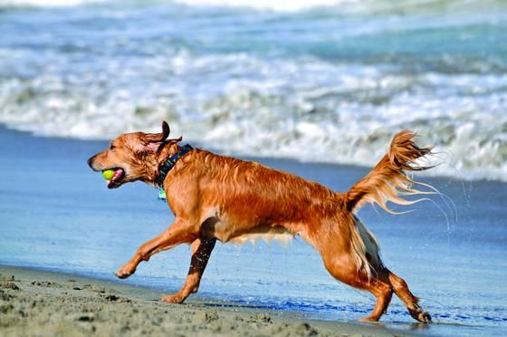 Dog_beach_9