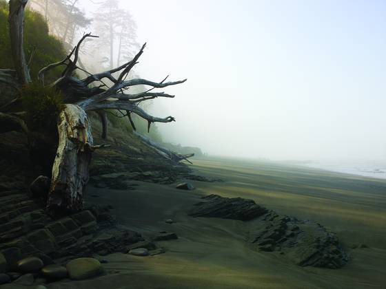 Driftwood_tree