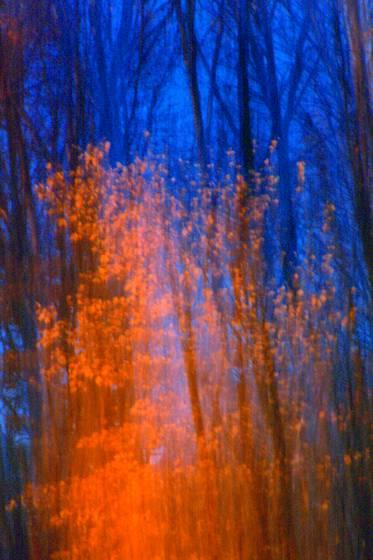 Fiery_tree