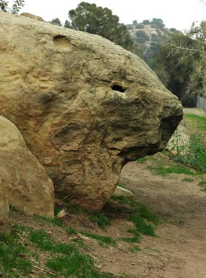 Lizard_rock