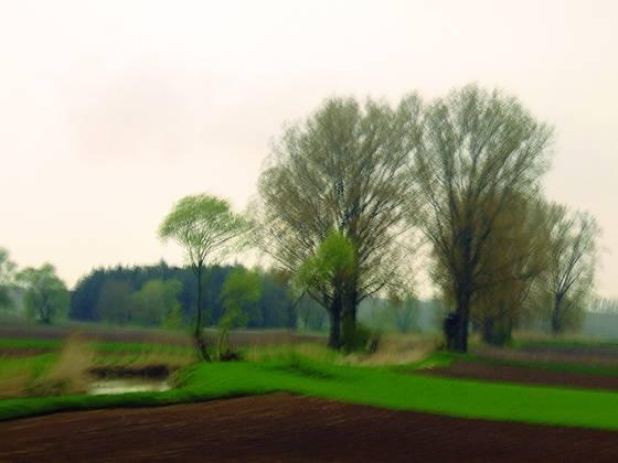 Trees___pond