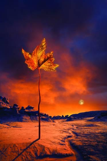 The_last_leaf