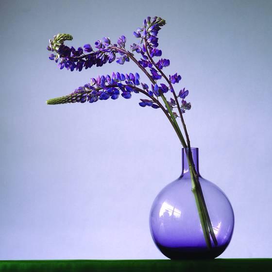 Purple_lupins