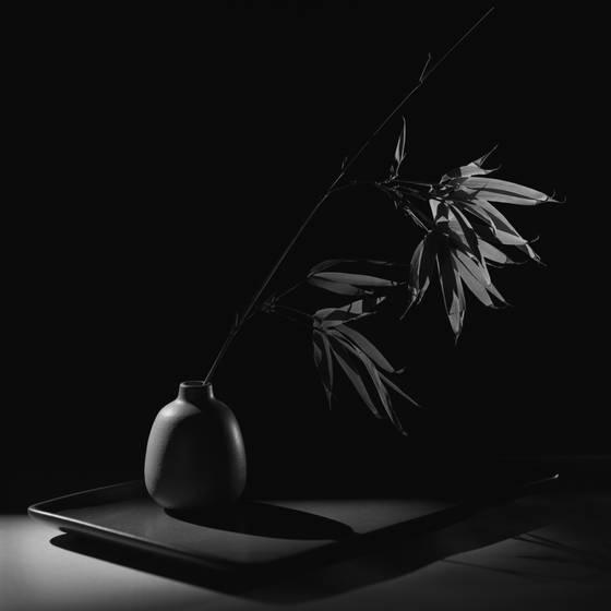 Bamboo_study