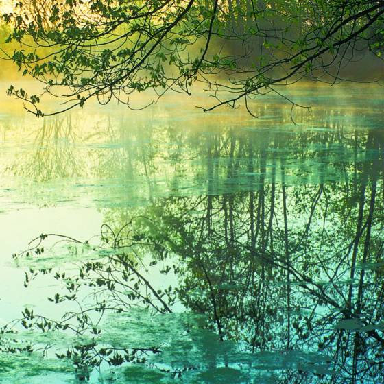 Zen_pond