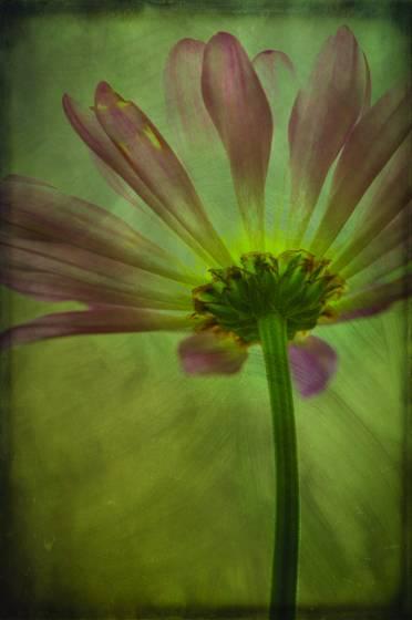 Flower_back