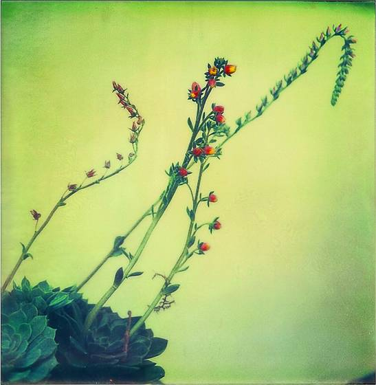 In_the_garden_9
