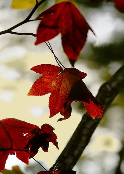 Fall_foliage_1