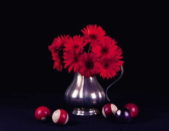 Red_gerber_daisies