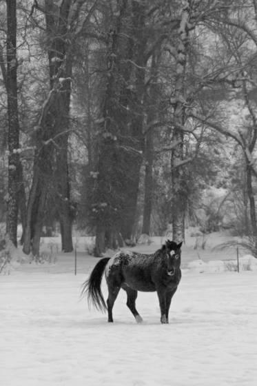 Equine_snow_scene