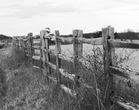 Old fence to no where jpg