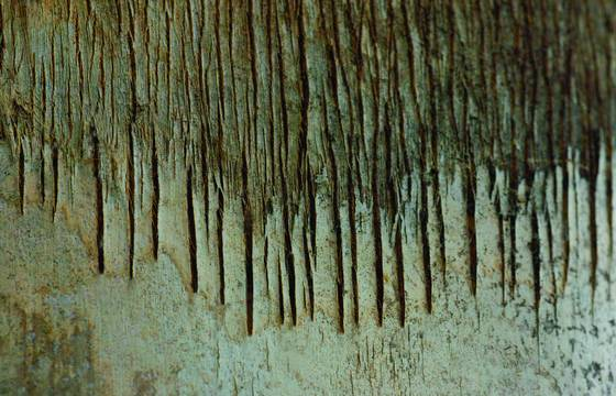 Tree_line