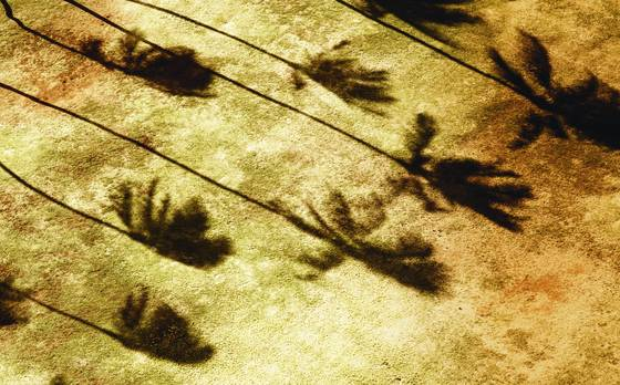 Palm_tree_shadows