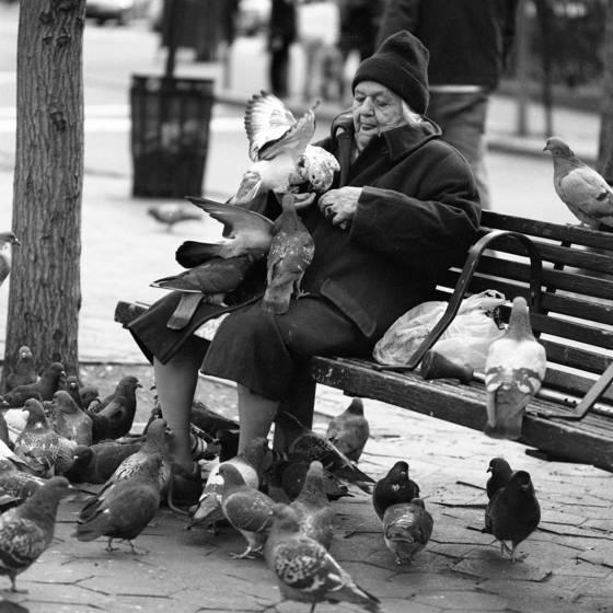 Pigeon_lady