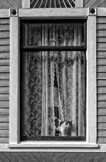 Cat_in_window