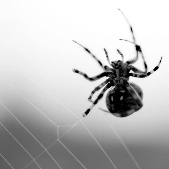 Weaving_spider