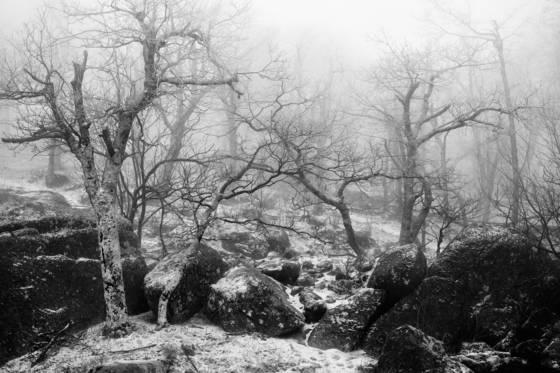 Zen_snow
