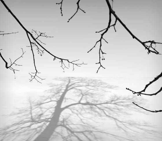 Shadow branches