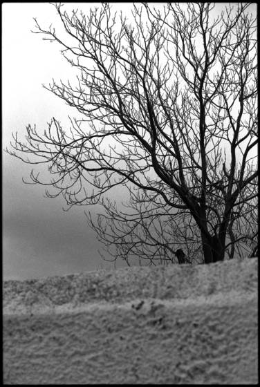 Wall_and_tree