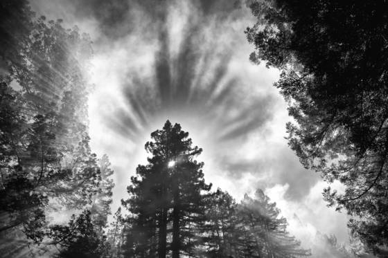Tree_halo