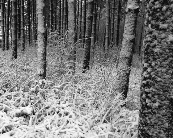 Snow_in_the_woods