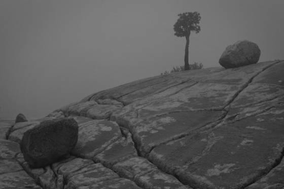 Boulders_and_tree