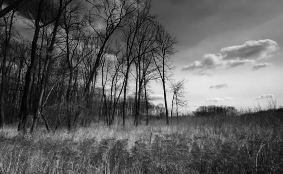 My_trees