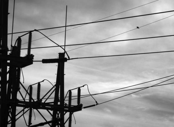 Bird_and_wires