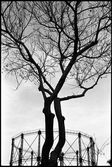 Tree_and_gasworks_2