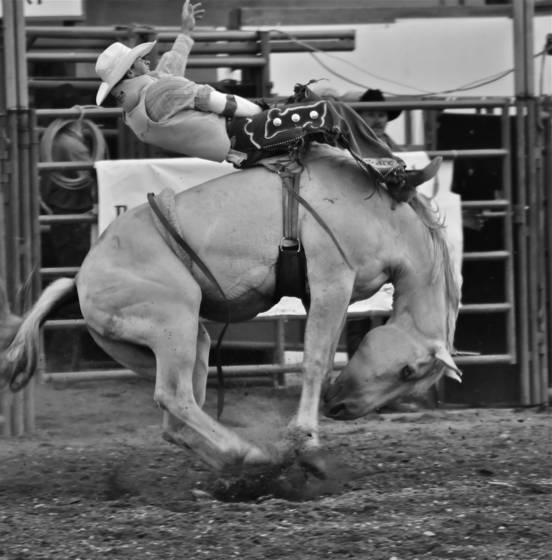 Bucking_horse